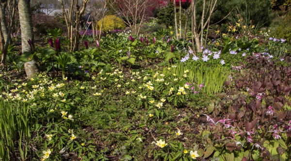 Woodland flowers at Wildside Garden Nursery, Devon
