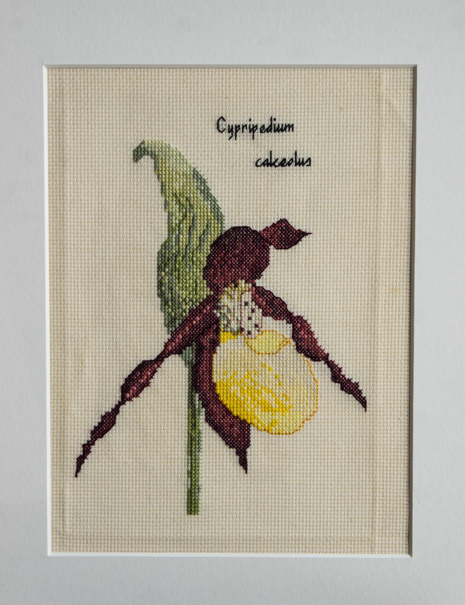 Cypripedium calceolus needlework (Exhibitor: Liz Livermore)