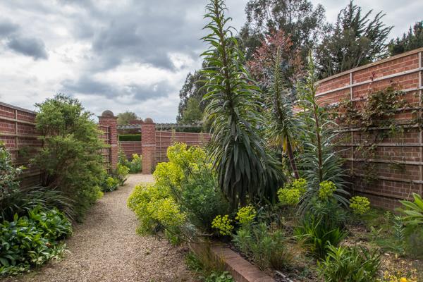Euphorbia and Echium