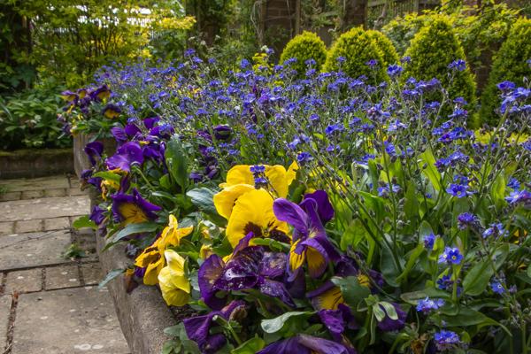 Dutch garden bedding