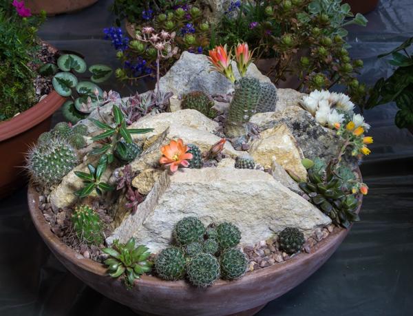 Cactus garden (Exhibitor: Jon Evans)