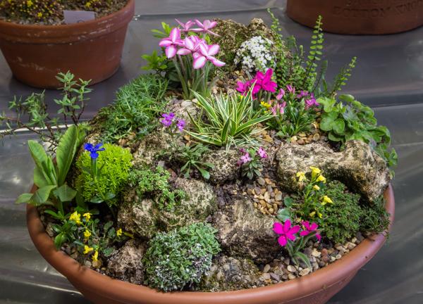 Miniature garden (Exhibitor: Mavis & Sam Lloyd)