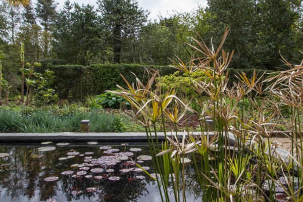 Raised pool with lilies