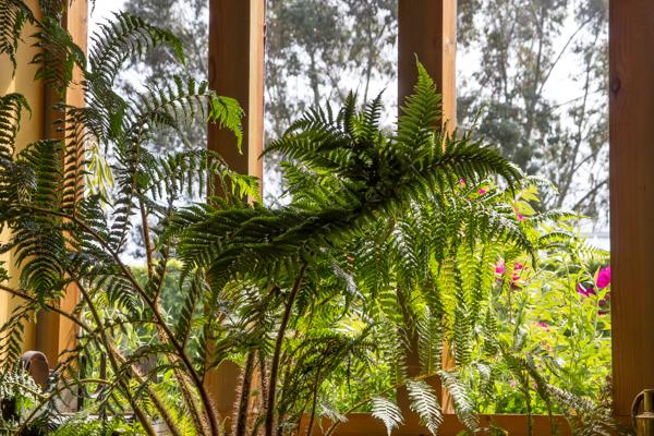 Tea room window