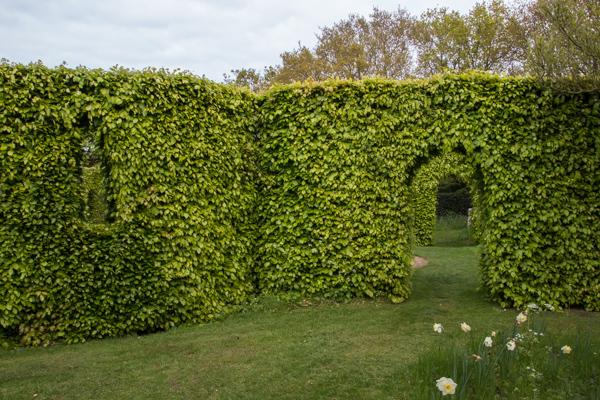Views through the hedges