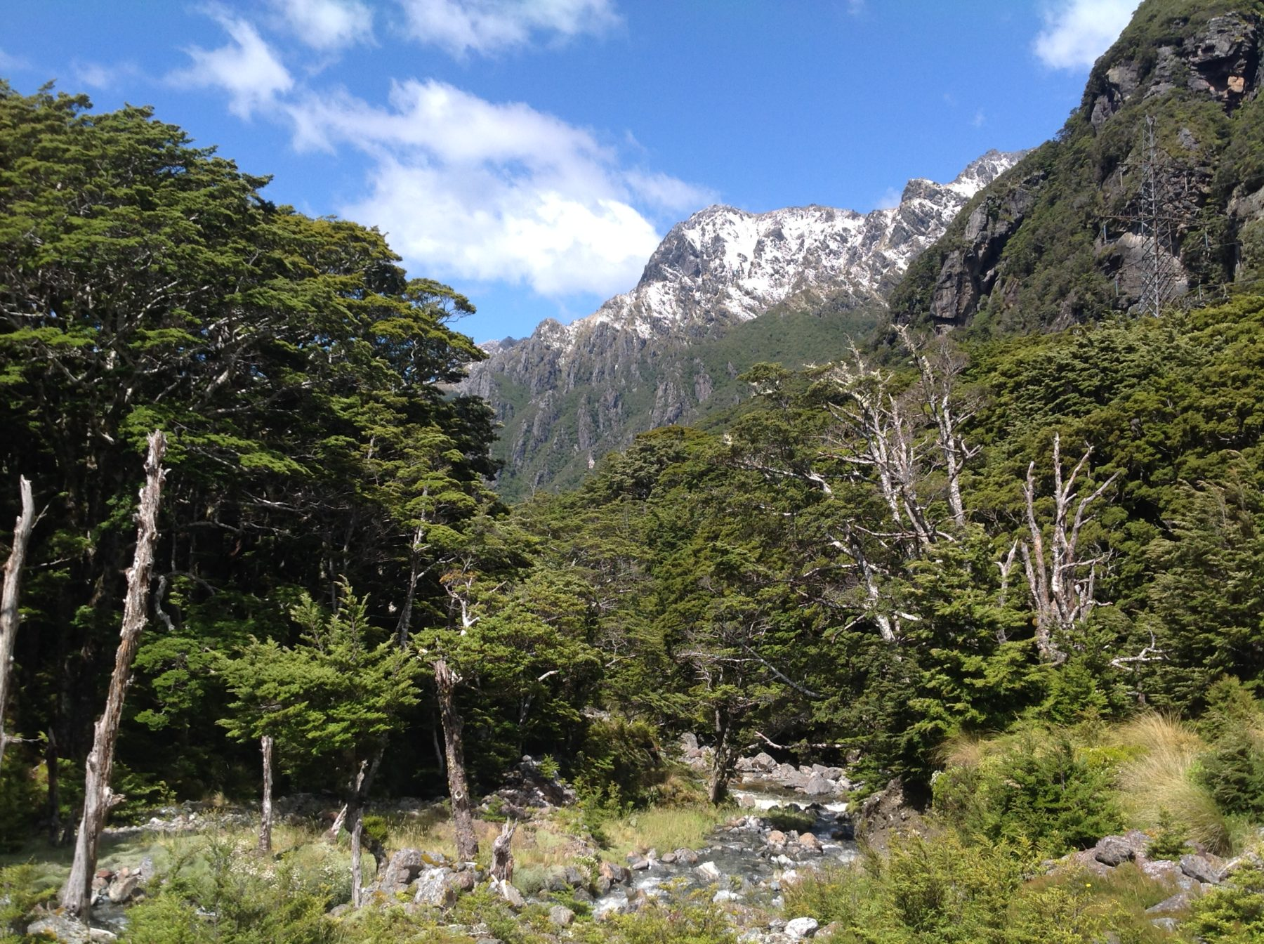 dd9d20e03d36f While concentrating on the special natural features, wildlife and plant  communitites, this trip also allows you to join the New Zealand Alpine  Garden ...