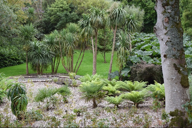 Logan garden with Cordyline and Dicksonia