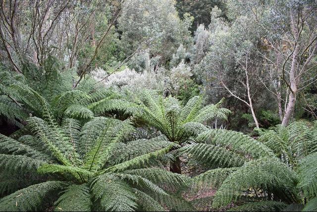 Logan garden Tasmanian wood