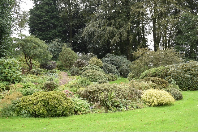 Rhododendron in the Threave rock garden