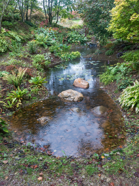 Stream at Wildside Nursery