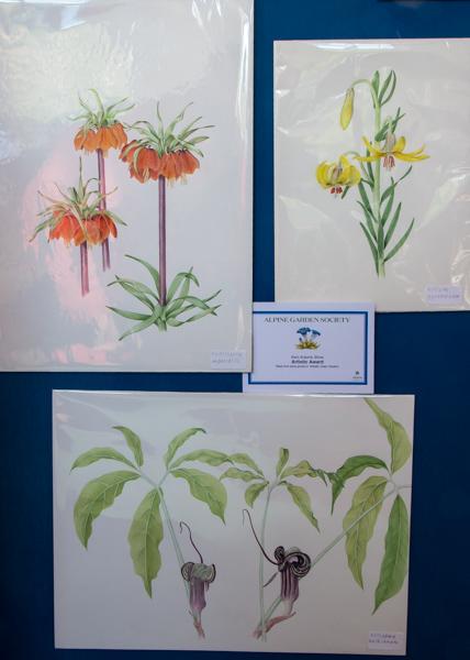 Three portraits of alpine plants