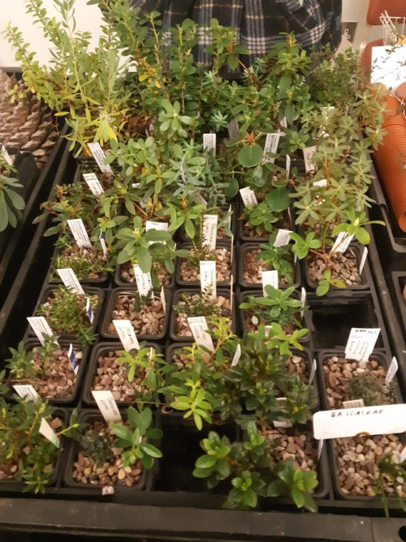 Some of the plants on sale
