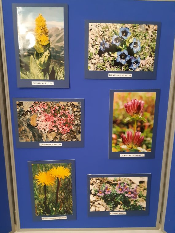 Photographic exhibition from Peter Sheasby on flowers in the Swiss Alps