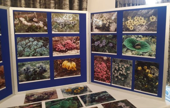 Photographic exhibition from Christopher Grey-Wilson of wildflowers in China and the Himalayas
