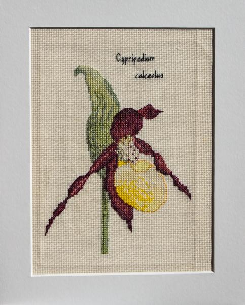 Cypripedium calceolus cross-stitch