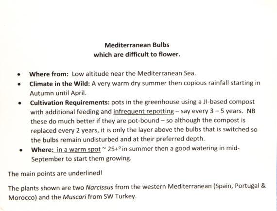 Mediterranean bulbs rules