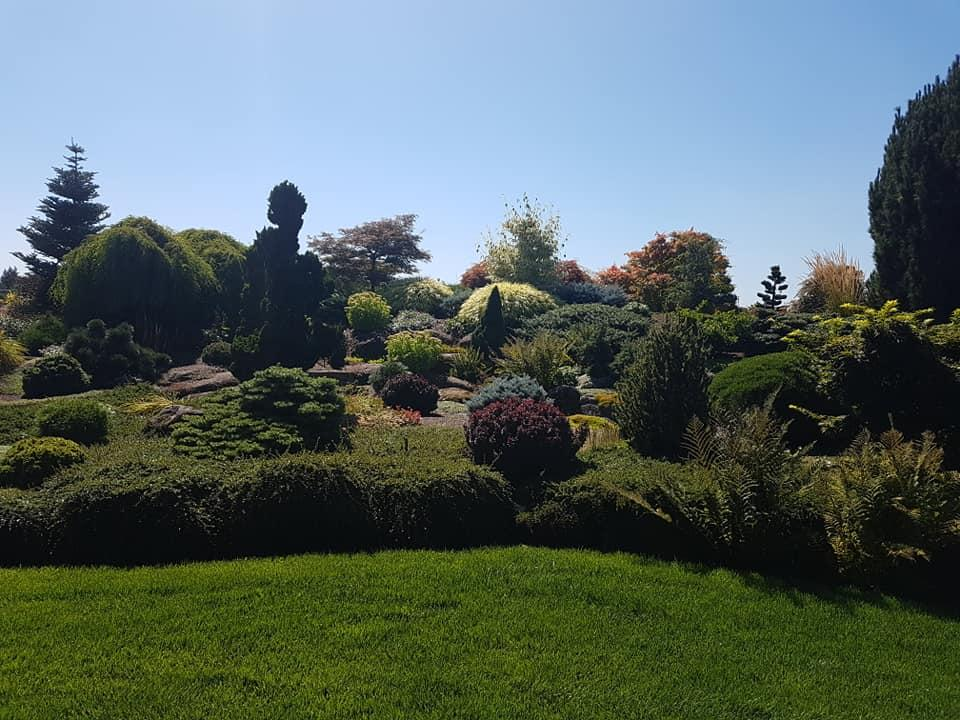 More of a rock garden setting with smaller dwarf specimens and herbaceous plantings, smaller shrubs and Japanese maples.