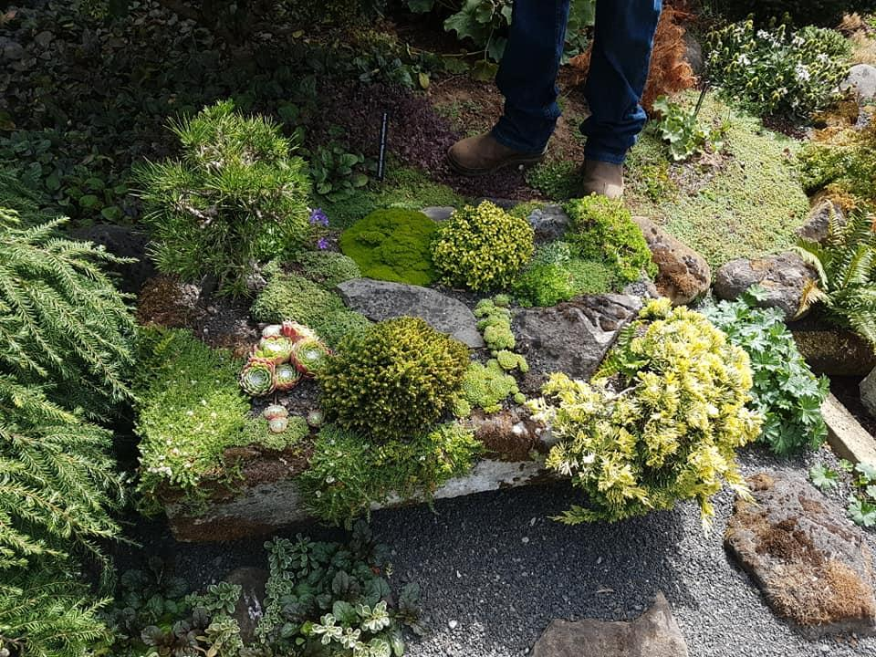 A wide selection of plants have been used to enhance the troughs at Iseli Nursery, Oregon