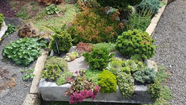 Densely planted troughs with true dwarf conifers and alpines