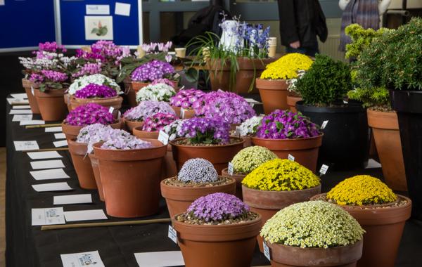 alpine flower show
