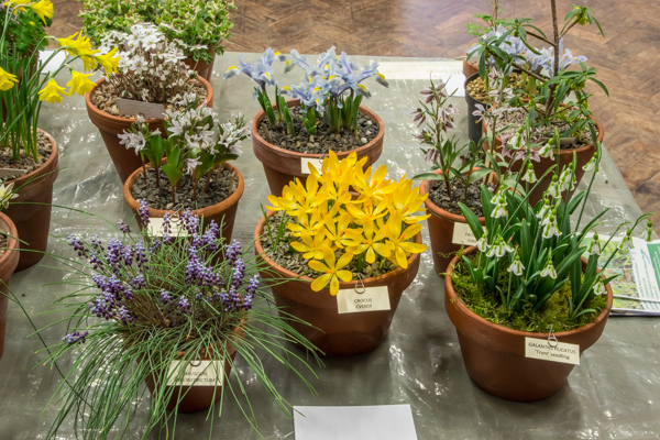 Small six pan exhibit by Rannveig and Bob Wallis, winner of the AGS Medal