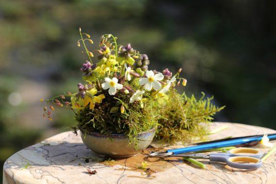 illustrating how to build up a flower arangement