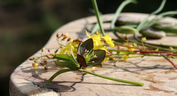 Brown fritillaria laid out with yellow flowers after cutting