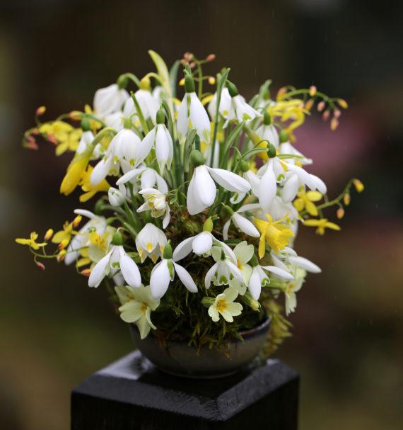 Finished snowdrop flower arrangement