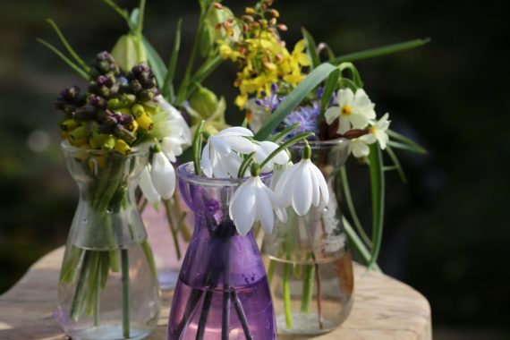 Snowdrops and other flowers in glass vases
