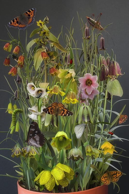 fritillaria flower arrangement