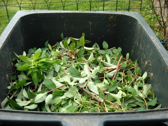 Green waste in wheelie bin