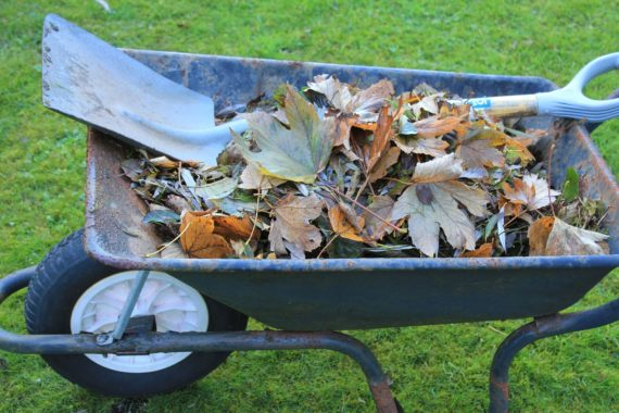 Leaves in wheelbarrow