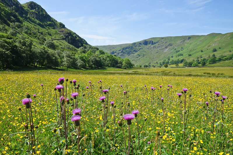 RSPB Haweswater reserve wildflowers