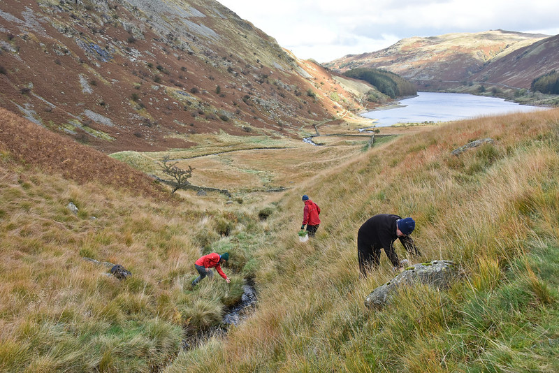 RSPB Haweswater reserve being planted