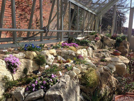 Alpine House rock garden