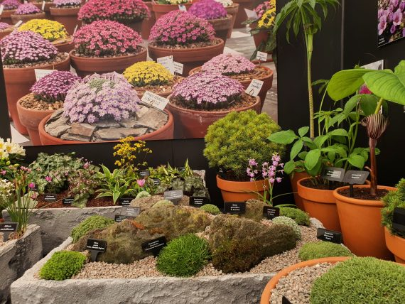 ags display at tatton show