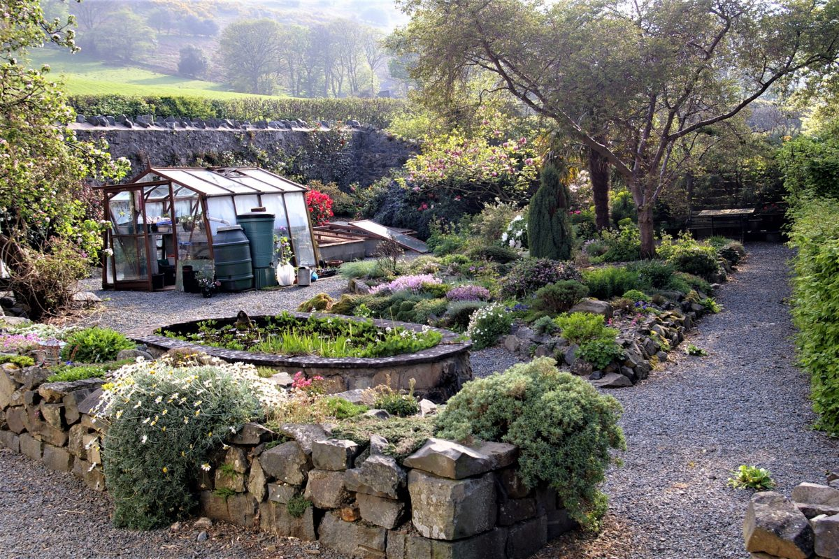 Dwarf shrubs included among other alpine plants in the author's raised bed garden