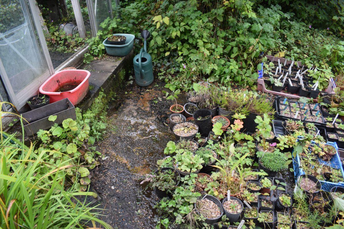 10 plants for September colour
