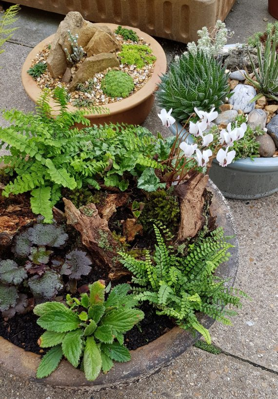 John Dower online plant talks miniature gardens