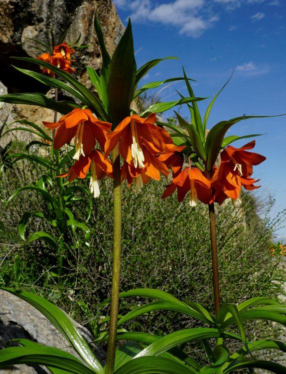 Chris Gardner - online plant talks zoom lectures