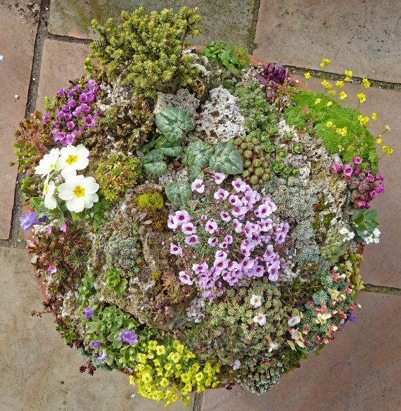 John Dower Miniature gardens online zoom talks