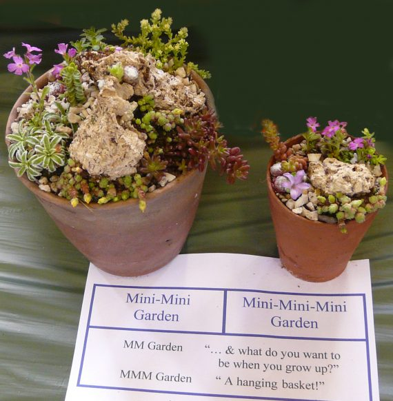 John Dower online gardening talks MIniature