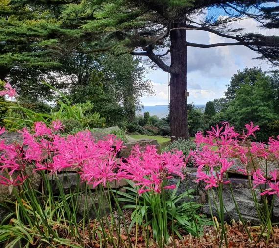 John Good's garden October 2021